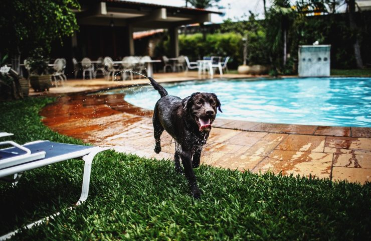 Pet Friendly Hotels-min